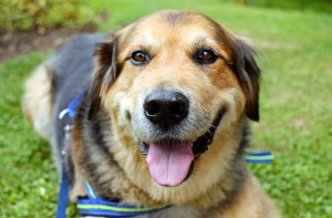 dog-1535905_640